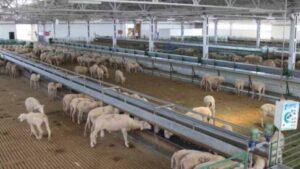 50-100 Koyun Ağıl Maliyeti ve Mera Hesaplama