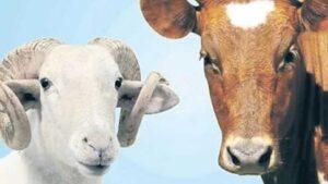 Tarım Kredi Kooperatif Hayvan Kredisi 2021