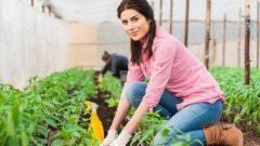 Ziraat Bankası Genç Çiftçi 2020 Kredisi Nasıl Alınır?