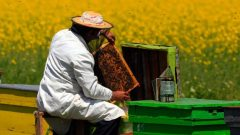 Arıcılık Destekleme Ödemeleri 2020
