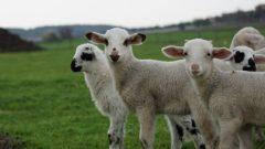 Hayvan Genetik Koruma 2020 Desteklemesi