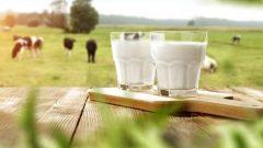 Süt Parası Ne Zaman Yatar? 2020 Destekleme Ödemeleri