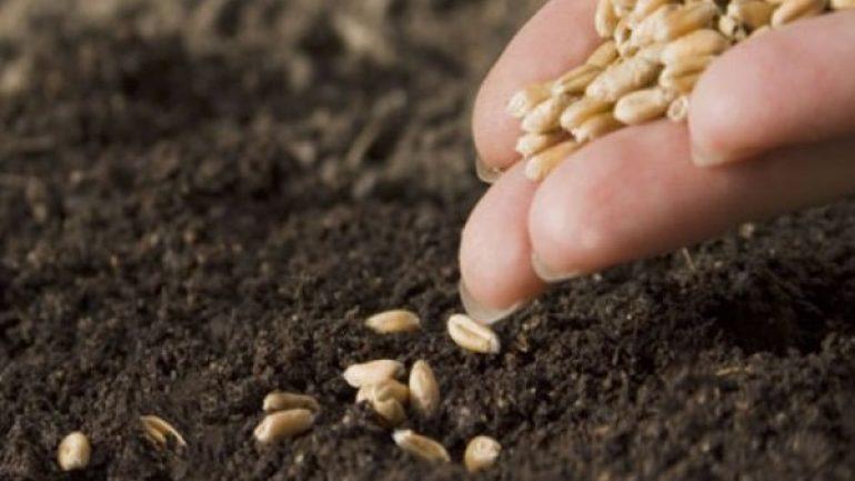 Tohum Destekleme Parası Ne Zaman Ödenecek 2020 Dönemi