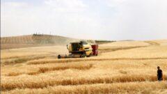 2020 Yılı Tarımsal Destekler Belli Oldu